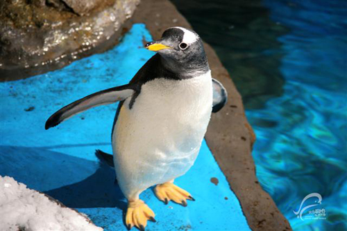 青岛极地海洋世界动物表演展示