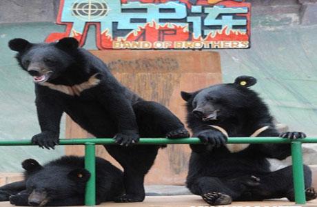 青岛东方熊牧场门票团购,东方熊牧场金秋特惠仅需43元乐享原价120元