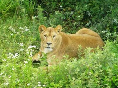 青岛森林野生动物园世界景区欣赏