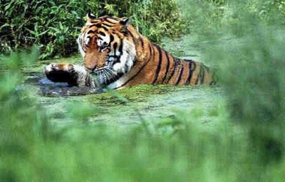 青岛野生动物园门票,青岛野生动物世界门票