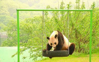 青岛野生动物世界门票团购,青岛森林野生动物园世界团购票,团购青岛