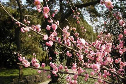 无锡梅园风景区现有三大主要景区:以梅文化为主题的梅花景区.