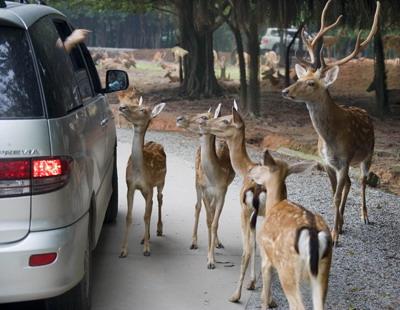 常州淹城野生动物园实景欣赏