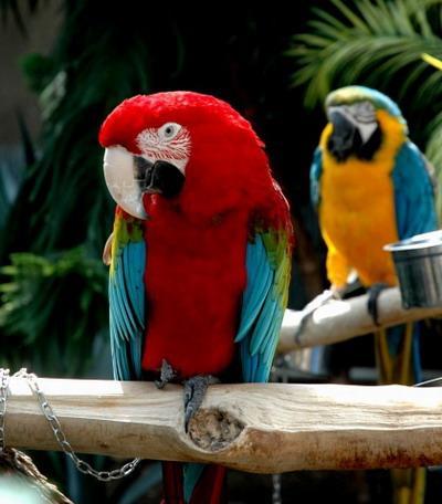 动物 鸟 鹦鹉 400