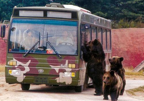 沈阳棋盘山森林野生动物园实景欣赏