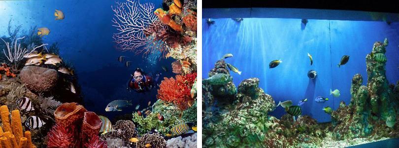 南京海底世界实景赏析