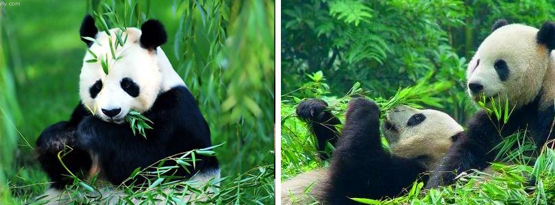 成都雅安碧峰峡野生动物园门票团购