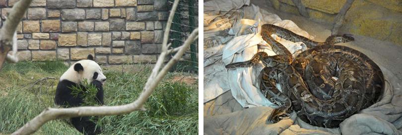 本长沙动物园团购票包含:步行区 车行区 森林剧场 大象表演,超值套餐!