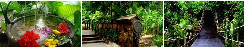 海南呀诺达热带雨林景区实景欣赏