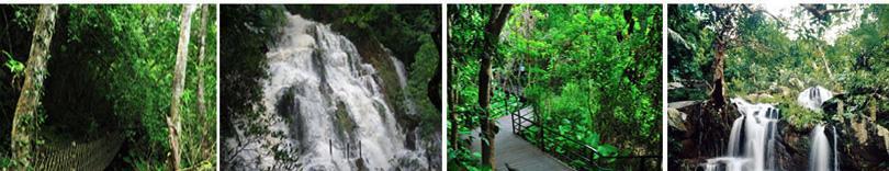 三亚呀诺达热带雨林景区门票团购