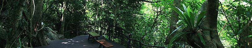 海南三亚呀诺达热带雨林景区门票团购