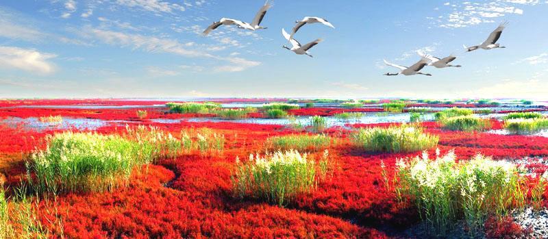 辽宁盘锦红海滩风景区以全球保存得最完好、规模最大的湿地资源为依托,以举世罕见的红海滩、世界最大的芦苇荡为背景,是一处自然环境与人文景观完美结合的纯绿色生态旅游系统。红海滩是大自然孕育的一道奇观。碱的渗透与盐的浸润,是红海滩得以红似朝霞的条件。人们为温饱而奔波的时候,叫她红草滩;人们需要用她休憩心灵的时候,叫她红地毯。无论叫什么,她总是一如既往地燃烧,火,红,就是她生命的形式和内容。