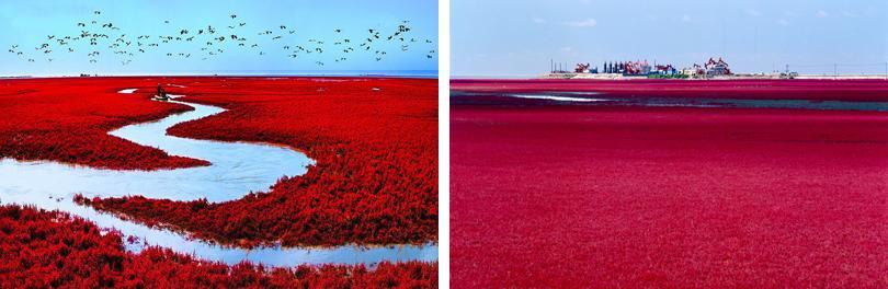 四喜券验证及消费登记  著名的红海滩风景区坐落于辽宁省盘锦市大洼县