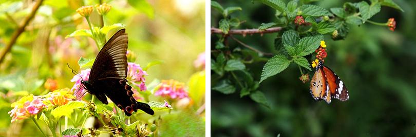 昆明世界蝴蝶生态园实景图片欣赏