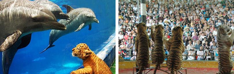 百兽彩车大巡游声势浩大振奋人心,而四座表演场馆均安排多场精彩的动物表演,每天下午近40分钟的大型动物广场艺术《百兽盛会》,更是世界首创,独一无二。海豚伴您共舞,百兽与您狂欢!深圳野生动物园在园内投资兴建的海洋天地是集大型海洋, 动物表演、海洋,生物展览、科普教育、休闲娱乐以及自闭症儿童康复基地等多功能为一体的现代化海洋主题公园。深圳海洋天地首期占地10万平方米,内设海洋剧场、惊险地带、互动空间、海星广场、观景平台、海洋部落等景观和商业网点,向游客展示神秘莫测、变幻万千、浪漫舒缓、绚丽多彩的海洋风情。 深