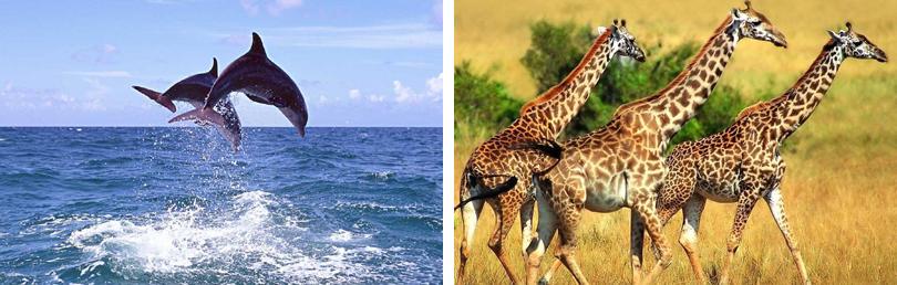 门票含动物园 海洋天地,海洋天地在动物园内,海豚伴您共舞,百兽与您