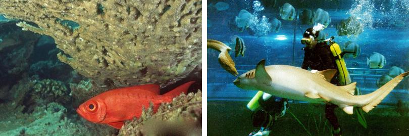 新澳海底世界可容纳2000人同时参观,主要包括海豚表演馆、小池区、企鹅馆、海豹馆、触摸池、海底隧道、表演休息区、科普展厅、科普教室以及海洋精品店、观海餐厅等,引进境外最先进的设备和水族管理技术,展示来自各大洋的鱼类、贝类等海底世界神秘的面纱。 漫步在新澳海底世界100米长、270度亚克力玻璃环绕而成的海底隧道中,五光十色的珊瑚群、色彩斑斓的银鲫、银龙鱼、中华胭脂鱼、巨骨舌鱼、食人鲳等鱼类会在您身边悠闲的游弋;最具绅士风度的企鹅先生会向您招手致敬;您还可以观赏到价值可观的旗鱼、蝠鲼、老鼠鲨等海洋生物的标本