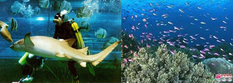 来到秦皇岛新澳海底世界你就会感觉大海蓝天很广阔,海豚馆里的海豚表演很吸引人。海底世界里的美人鱼真的很美,还有那些用手就能触摸到的各种海底生物,真是大饱眼福,不虚此行,尤其是孩子,在这里能够让小朋友亲近海洋生物,体验人与大自然和谐相处。