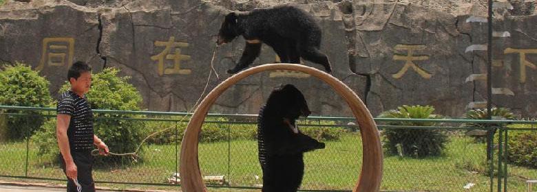 武汉九峰森林动物园门票团购,武汉九峰动物园团购仅55元即可享受原价6