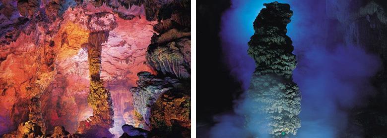 神龙洞风景区内还有国家珍贵的野生动植物分布,紫茎,兴山榆等