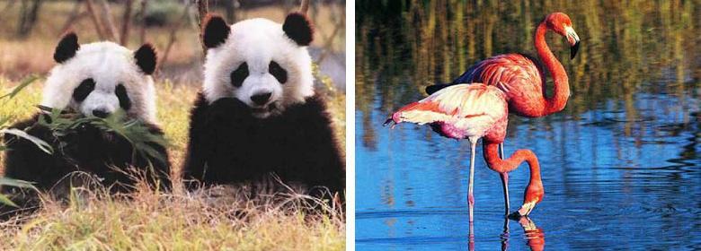杭州野生动物世界是目前华东地区物种最丰富的动物园