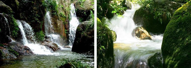大容山森林公园内的森林植物种类繁多,数目庞大,从山脚到山顶有规律的变化,依次为松林杉林,高山矮林森林,以及天然阔叶林为主等,而园内的山岳景观、森林植物景观、水体景观和气象景观,是景区迷人的四大自然景观,而美丽的云雾,更是让人称奇。
