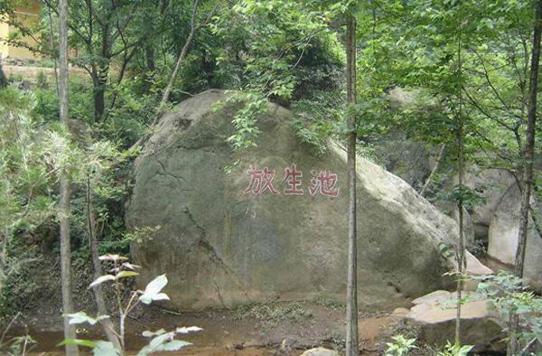>> 安庆大龙山国家森林公园门票团购