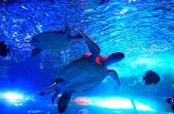 大明湖海底世界图片赏析