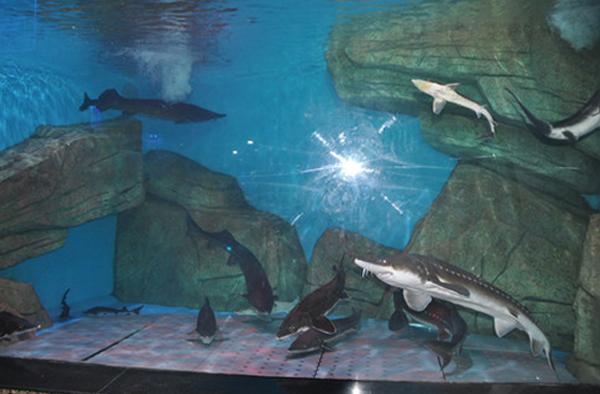 大明湖海底世界图片展示
