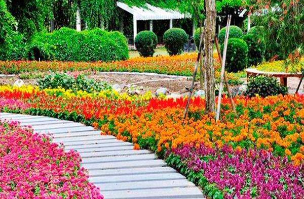 东南花都花博园实景照片