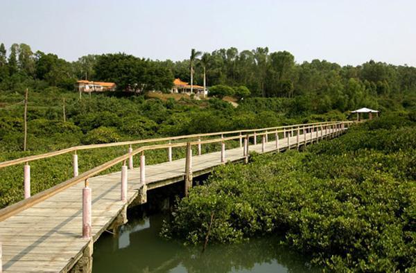 金海湾红树林景区内