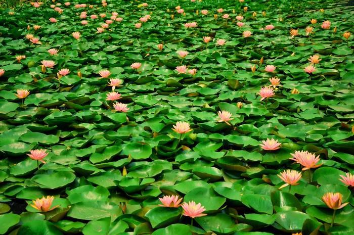 红荷湿地风景区里,波光粼粼,湖光山色,山水交映,一碧万顷,看着荷花,闻