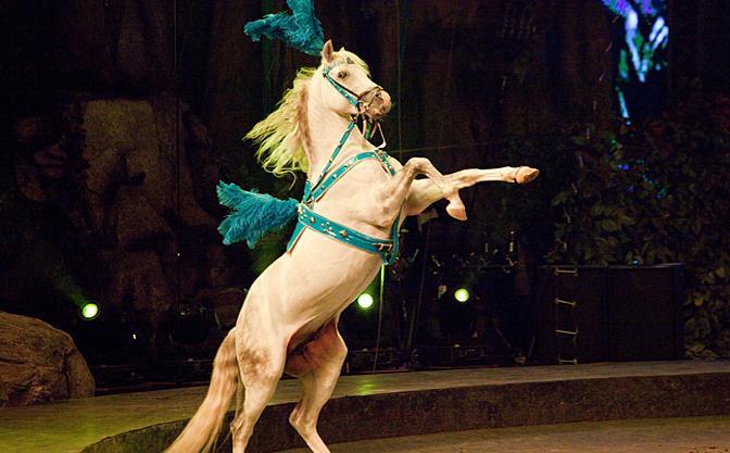 长隆国际马戏院
