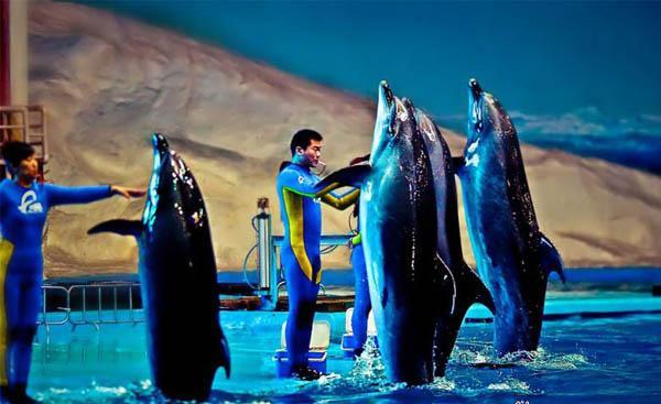 开封东京极地海洋馆斥资3亿多元建成,多个特色展馆,拥有规模庞大、数量繁多、品种齐全的海洋生物、极地动物,让游客们不出国门即可见着全球的动物。这里有国内首屈一指级别的海底隧道,宽敞明亮,您可以在此漫步徜徉,最近距离的细赏海底生物、室内极地冰川,海洋剧场展示海豚表演,聪明可爱的海洋动物带给您无限乐趣。
