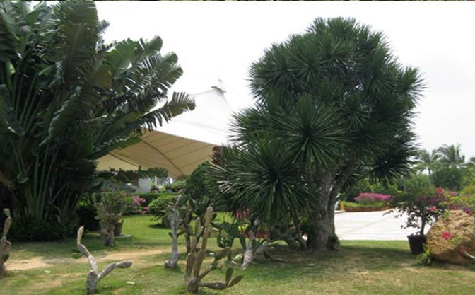 兴隆热带南药植物园美景
