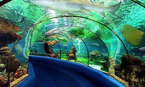 无锡海底世界实景一览
