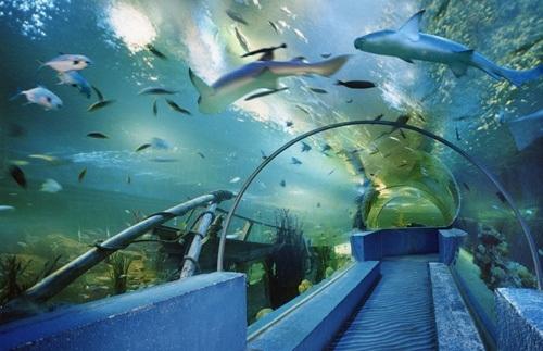 曲江海洋极地公园实景一览