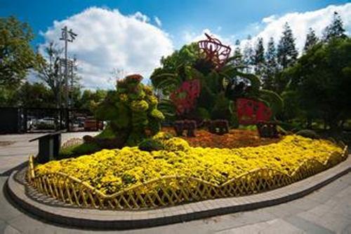 上海植物实图一览