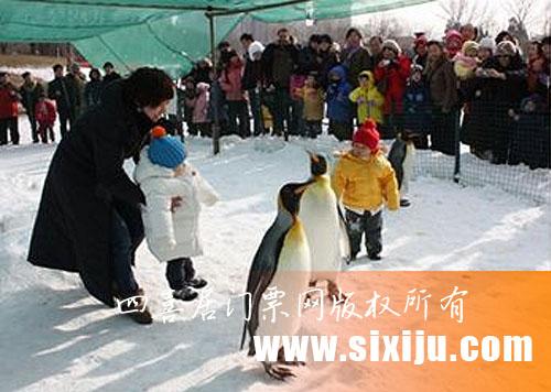 游客在跟企鹅玩耍