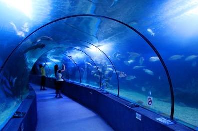 神奇的海底长廊