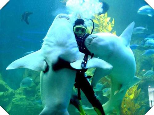鲨鱼表演馆
