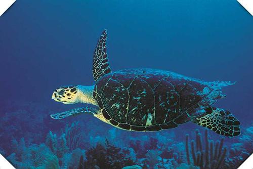 千年海龟池