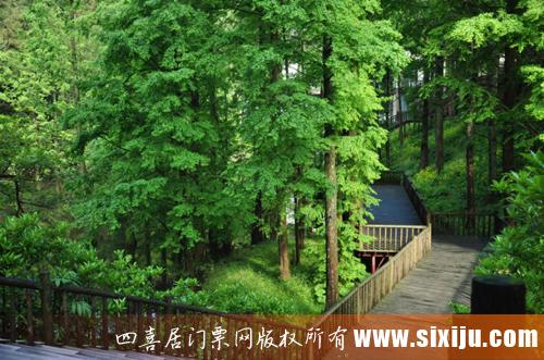 华顶国家森林公园内的旅游景观