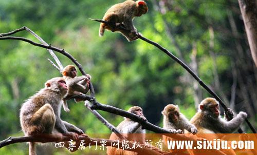 临安太湖源风景区图片4