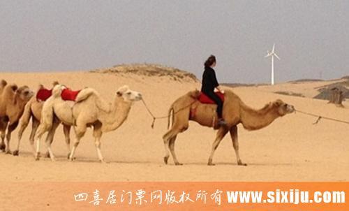 厚田沙漠生态旅游景区图5