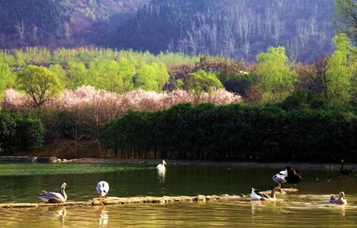 秦岭野生动物园鸟区