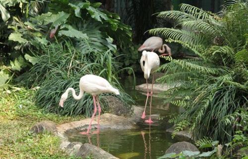 海南热带野生动植物园火烈鸟