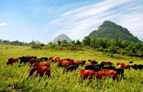位于长江三峡旅游带腹地,地处重庆市云阳县,在2005年被正式授予国家