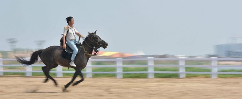 连理岛马匹骑行