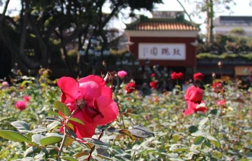 墨宝园之玫瑰园